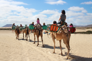 A camel ride along Corralejo beach in front of the Riu Oliva Beach Resort in Fuerteventura