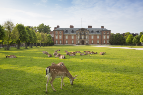 deer outside Dunham Massey