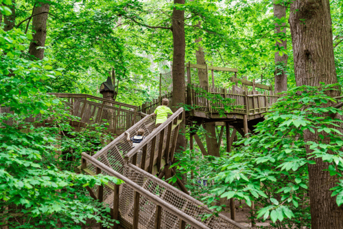 Tree trails at BeWILDerwood Cheshire