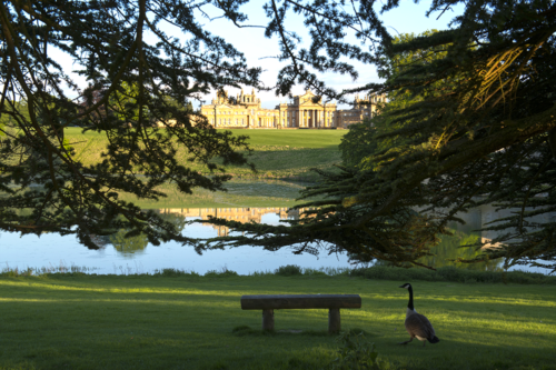 Blenheim Palace in the Cotswolds – our family day out review and top tips
