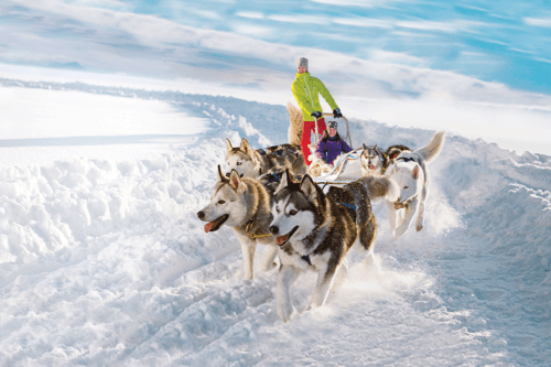 Huskies in Lapland