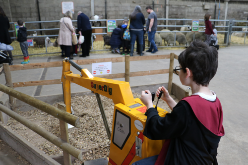 A boy on a mini digger with animals behind at Cockfields Farm