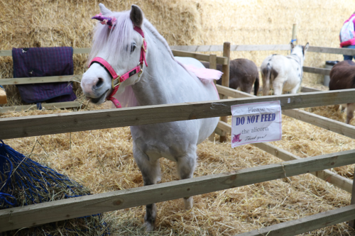Review: Cockfields Farm near Manchester – more than a petting farm for children