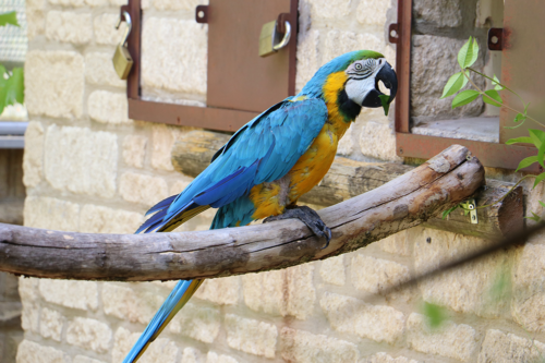 A parrot at Cotsold Wildlife Park and Gardens