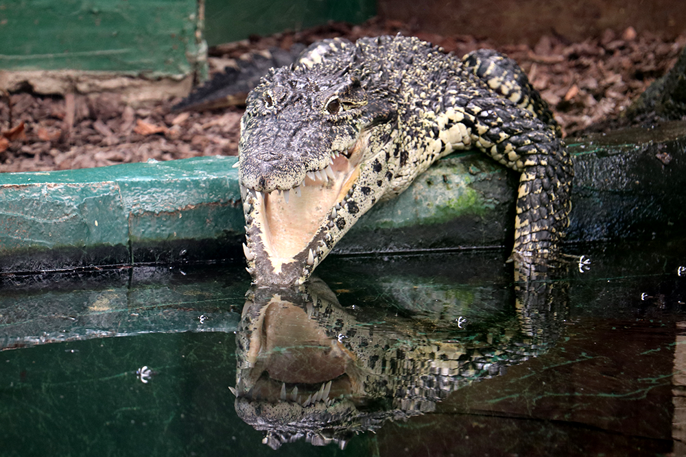 Crocodiles of the World – we visit the UK's only crocodile zoo with our children
