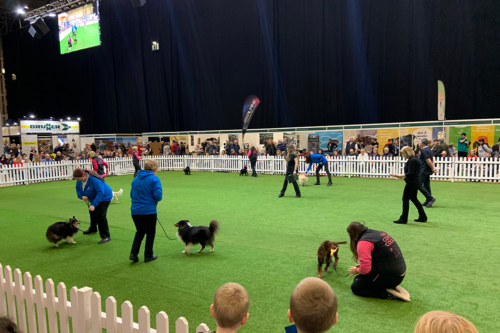 The dog arena at The show runs until February 23 2020 at the NEC in Birmingham.