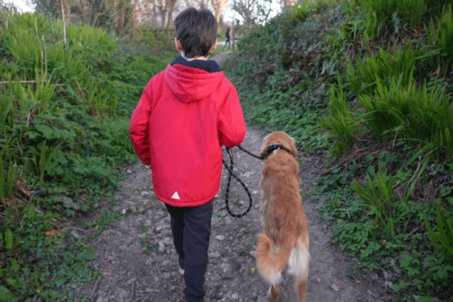 A box walking his dog at The Valley in Cornwall