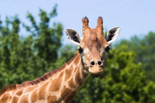 Review: Marwell Zoo in Winchester – home to more than 1,200 animals
