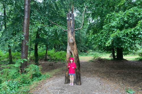 Stick man at Haldon Forest Park