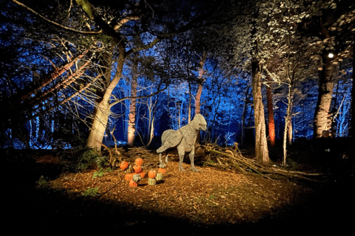 Hippogriff at Harry Potter: A Forest Experience