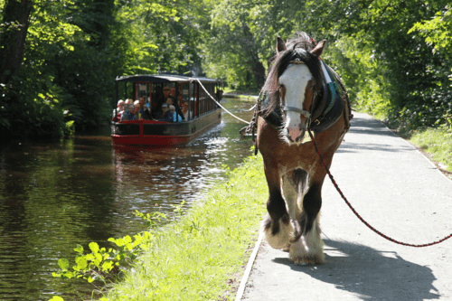 Horse drawn boats from Llangollen Wharf