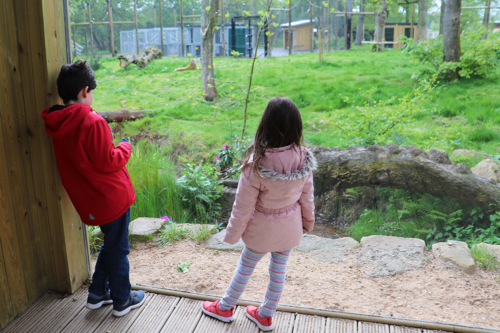 Two children at the tiger viewing area at Knowsley Safari Park
