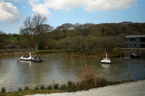Swan pedalos at Lappa Valley