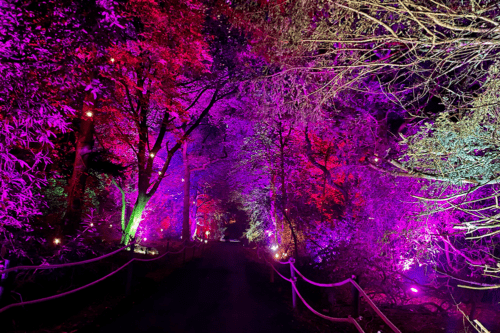 Light trail at Harry Potter: A Forest Experience