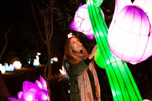 Lightopia 2020: Spectacular lantern and light festival returns to Manchester