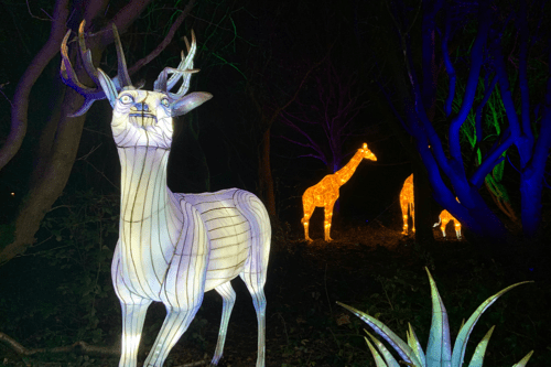 Animals at Lightopia