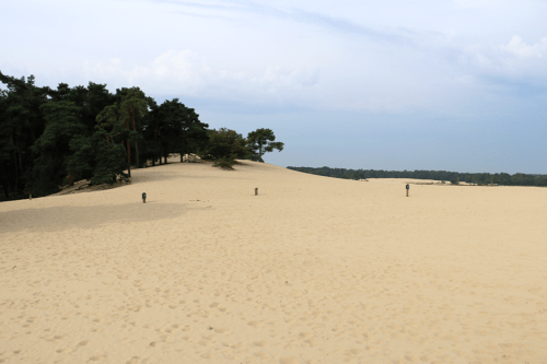 the Dunes of Loon in Drunen National Park