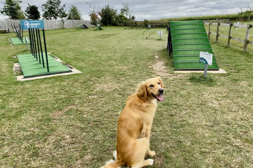 A dog in the agility area at Love2Stay holiday park in Shropshire